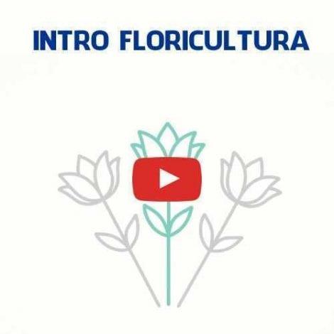 intro-introduco-vinheta-youtube-flores-D_NQ_NP_793597-MLB27394861468_052018-F