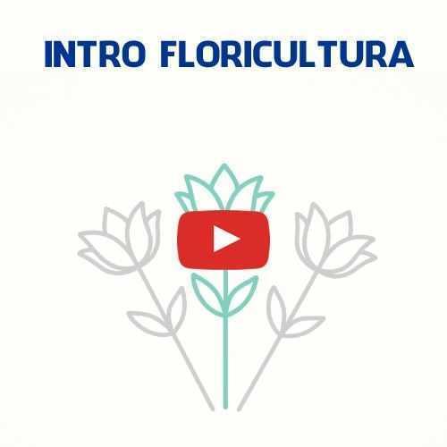 Introdução Vinheta Youtube Flores